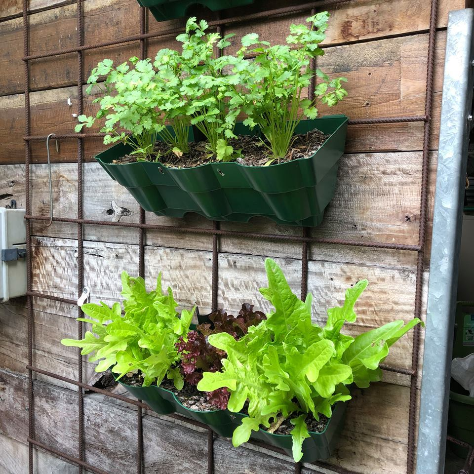 Vertical Wall Garden Planter