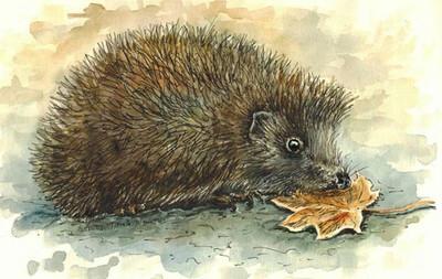 Hedgehog. Еж