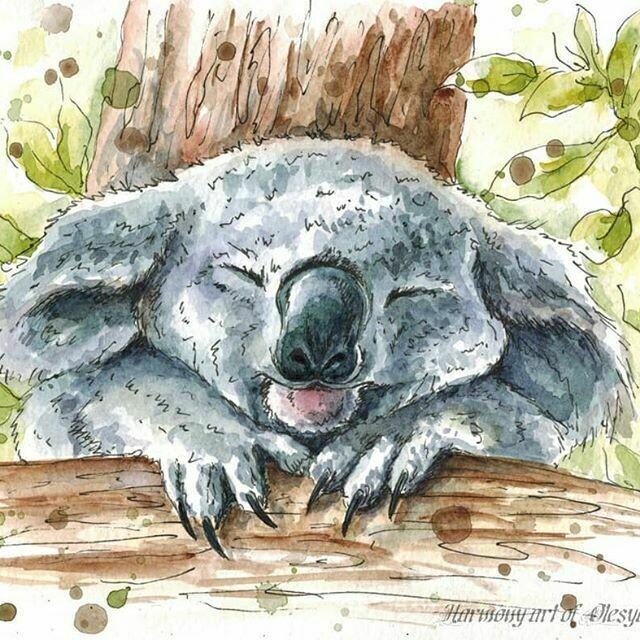 Koala. Коала
