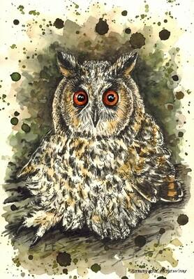 NEW. Owl. Сова