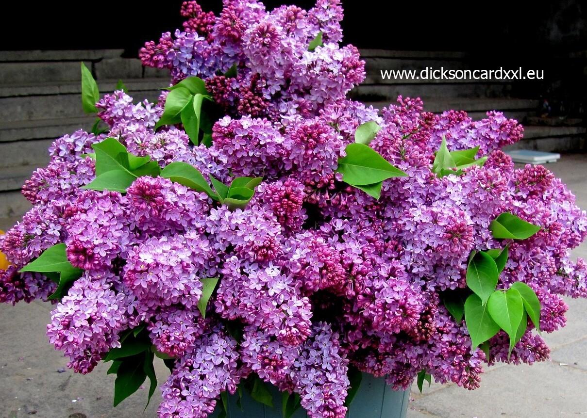 NEW. Bouquet of lilacs. Букет сирени