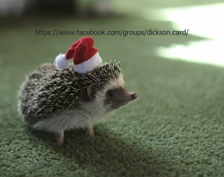 Еж в новогодней шапке