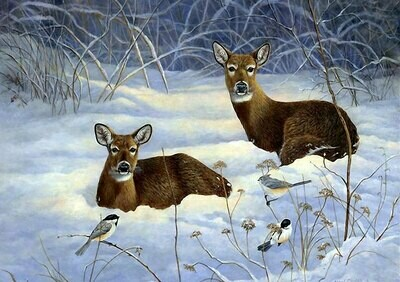NEW. Roe deer in the snow