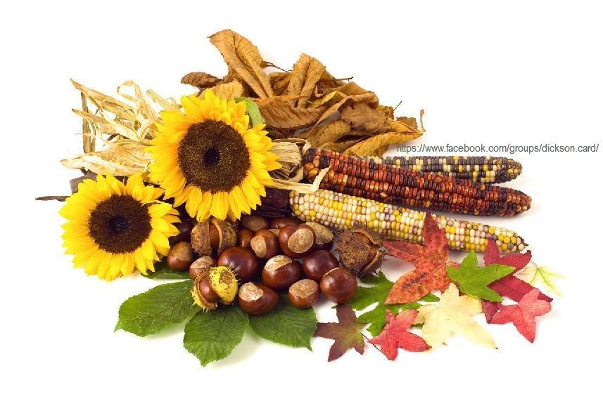 Gifts of autumn.
