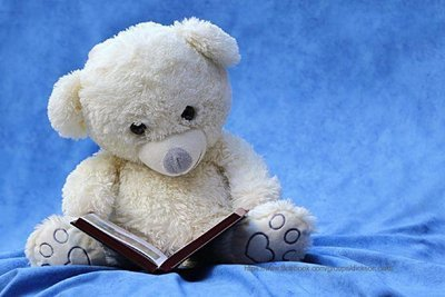 White teddy bear with a book.