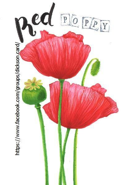 Botanical illustration, poppies from © Maria Shishcova