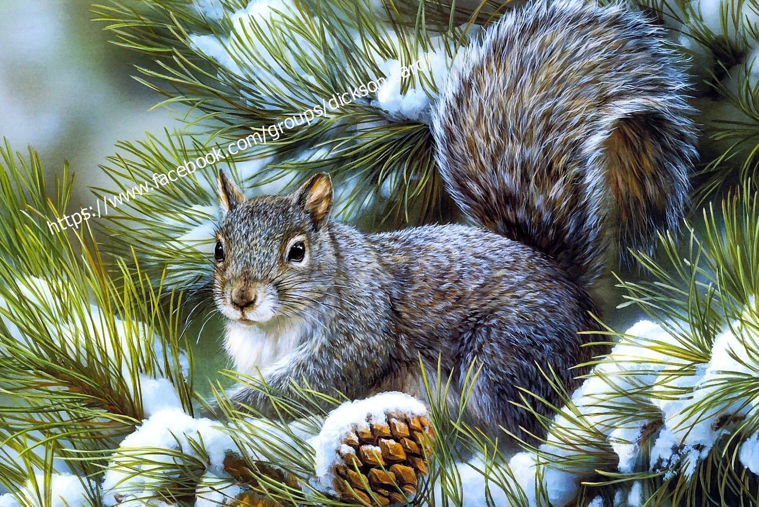 Squirrel in winter spruce branches