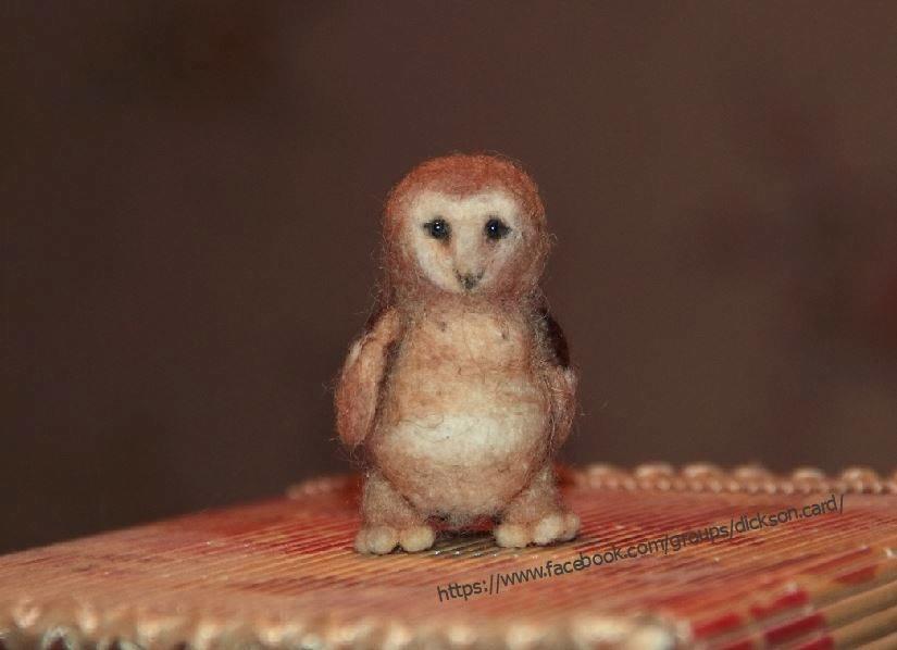 Owlet © L. Niftaliyeva