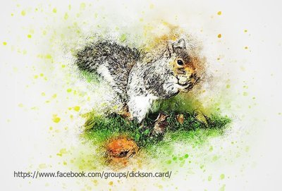 Squirrel gnaws a nut.