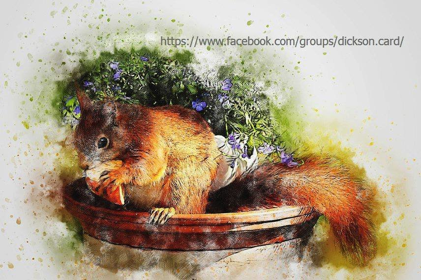 Squirrel nibbles an apple.
