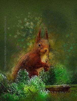 Squirrel in spruce branches🐾