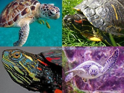 Turtles, collage