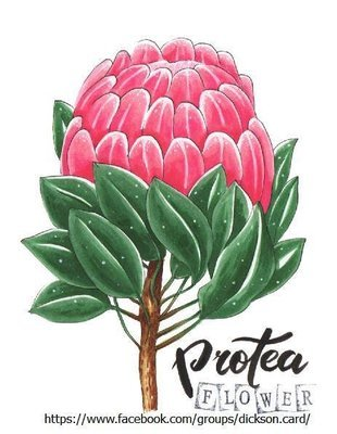 Protea Flower © Maria Shishcova