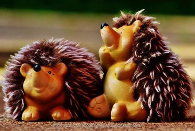 Hedgehogs shaggy