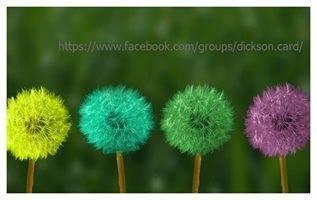 Multicolored dandelions