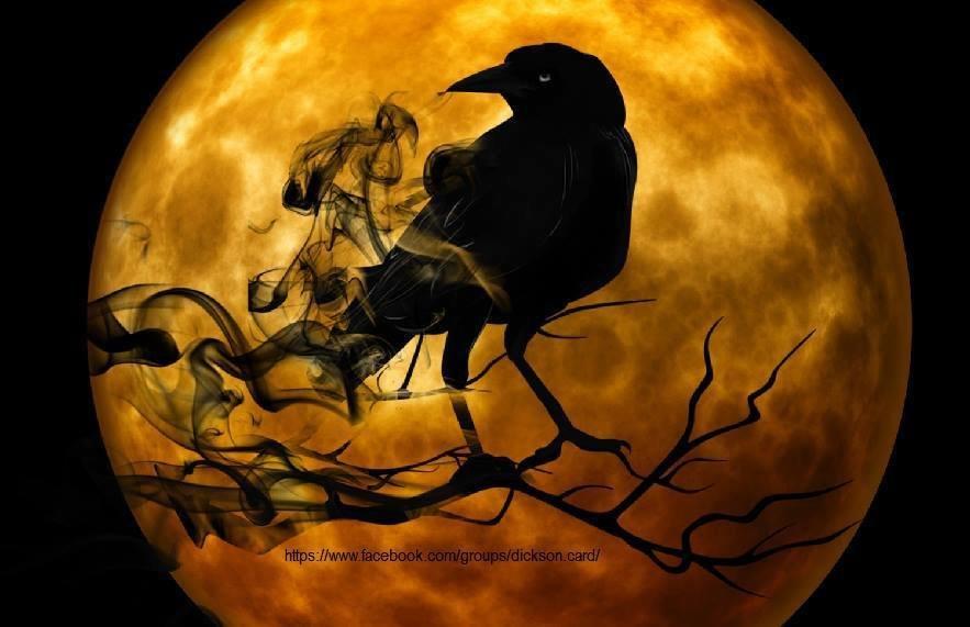 Black Crow under the moon