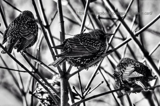 The birds N.Chernenko