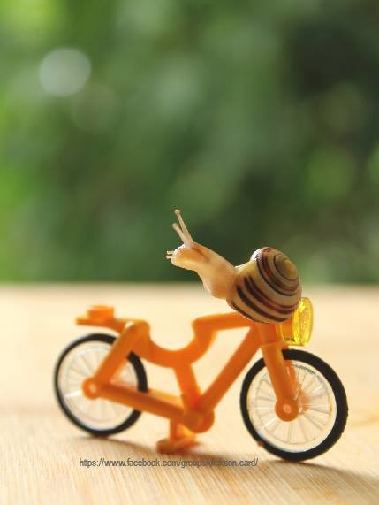 Snail on a bicycle