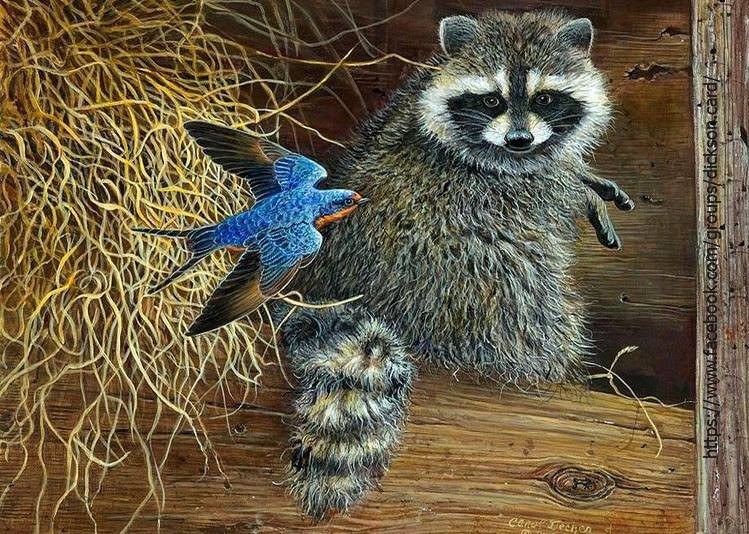 Raccoon with a bird