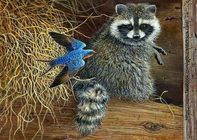 Raccoon with a bird