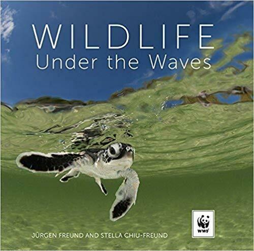 Wildlife Under the Waves