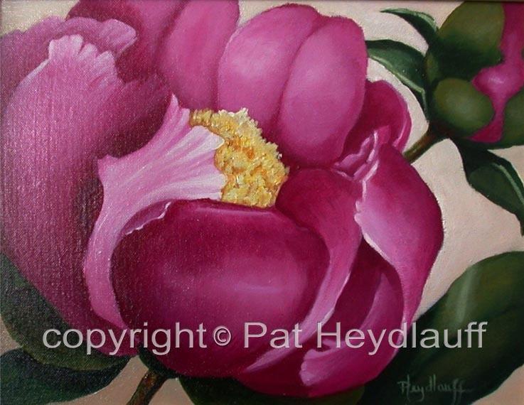 Peony in Full Bloom CNV124 / 14x11