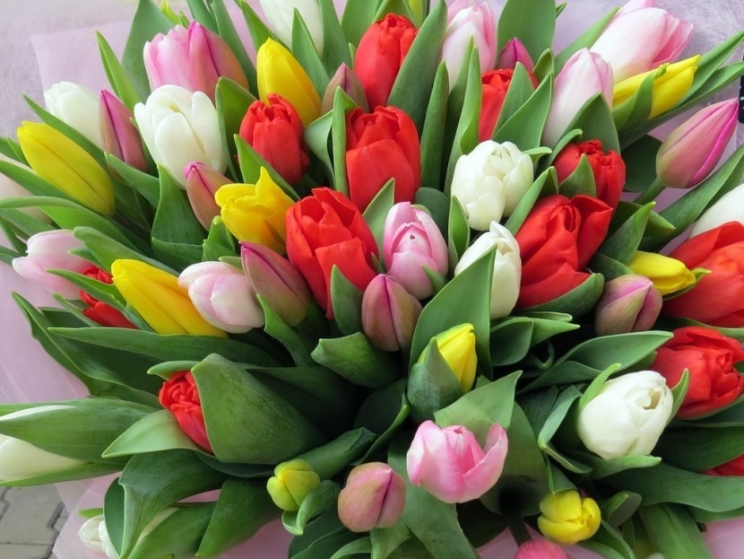 Тюльпан ассорти