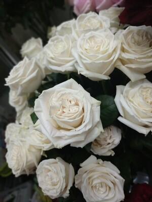 Роза Плай Бланка