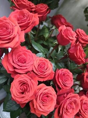 Роза сорт Нина