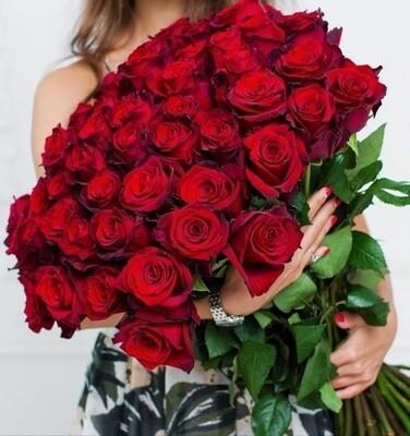 Роза экспловер 70-80 см
