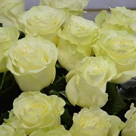 """Роза """"Мондиаль"""" 80 см"""