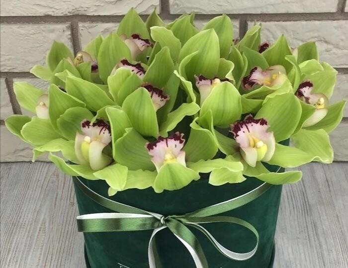 Аквабокс с орхидеями