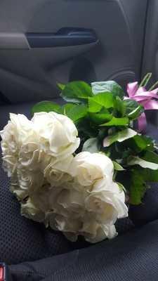 Белая роза, сорт Валентина