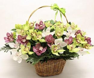 Корзина орхидей