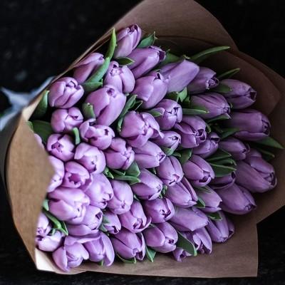 71 фиолетовый тюльпан