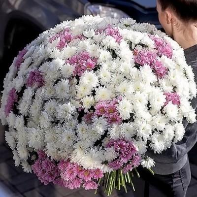 Хризантема кустовая с доставкой в Екатеринбурге
