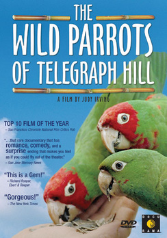Wild Parrots of Telegraph Hill - DVD - used