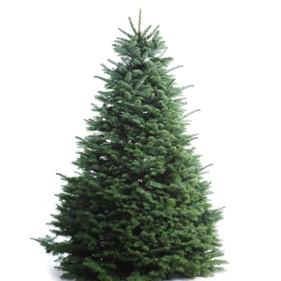 10 - 11' Tree