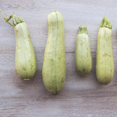 Zucchina Bianca