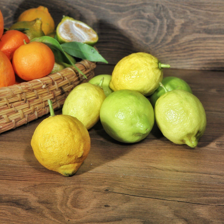 Limoni Naturali di Calabria