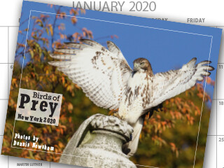 Birds of Prey Calendar 2020