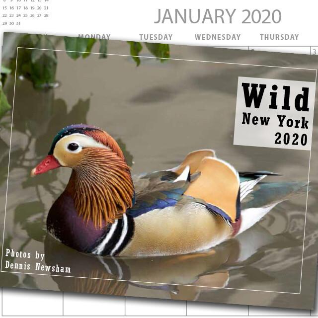 Wild New York 2020 Calendar