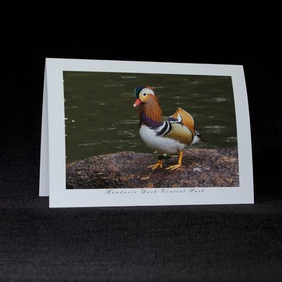 Mandarin Duck Greeting Cards Set of 4 Set A