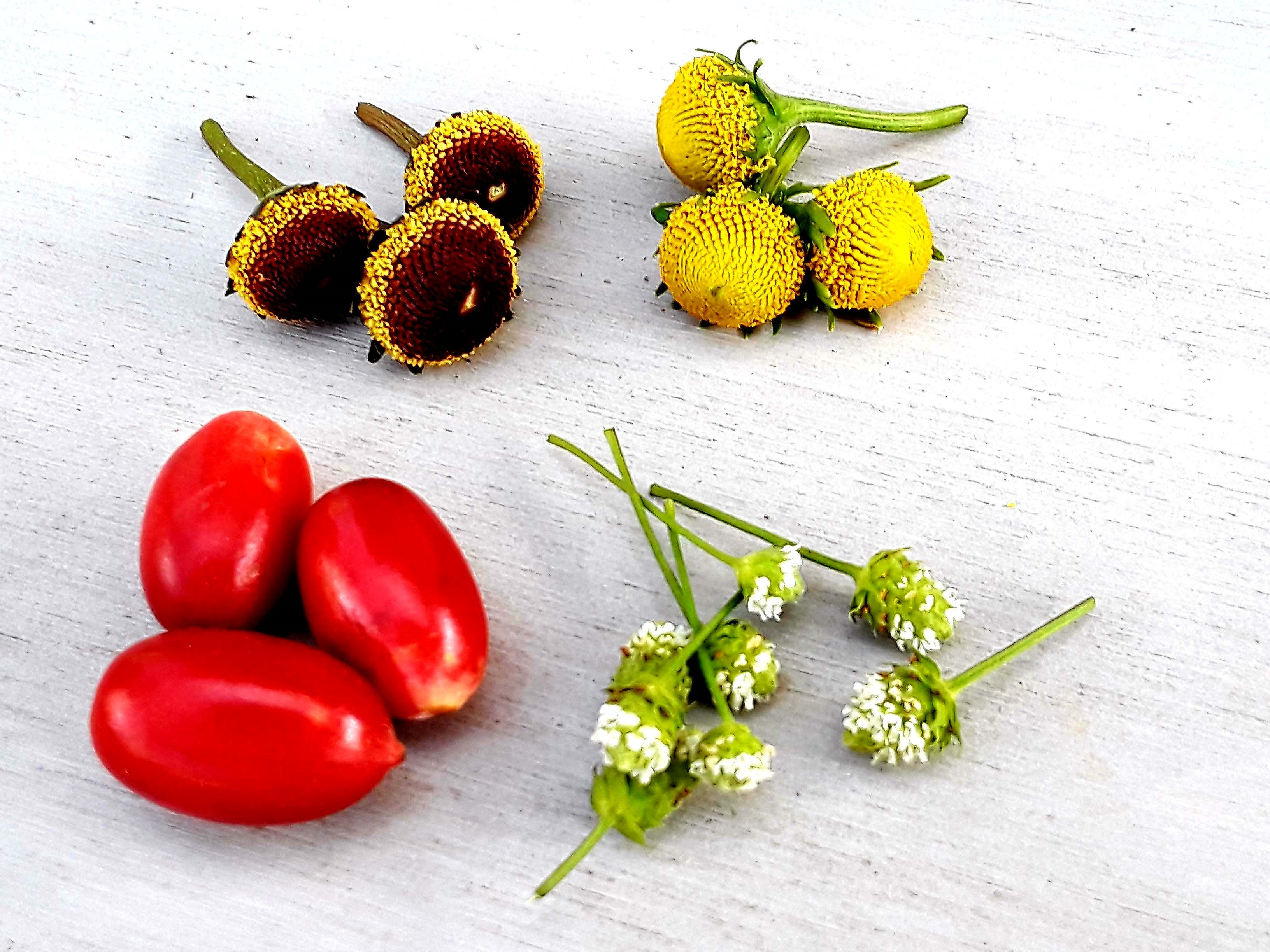 Flavor Tasting Party kit: Included - Fresh Miracle fruit berries, Buzz buttons &Dulci flowers. 00017