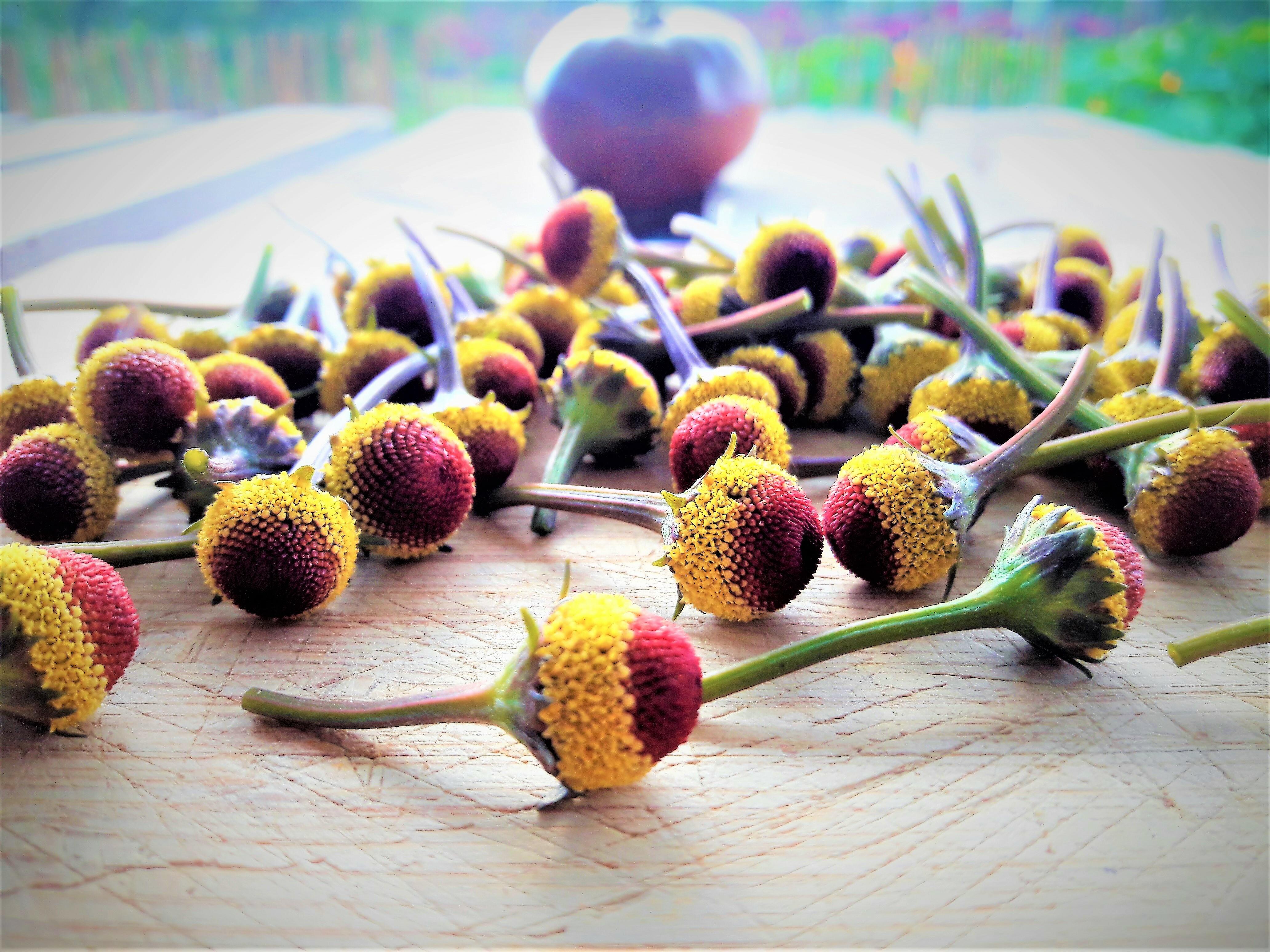 Fresh Buzz Button Flowers. Peek-a-boo variety. 00004