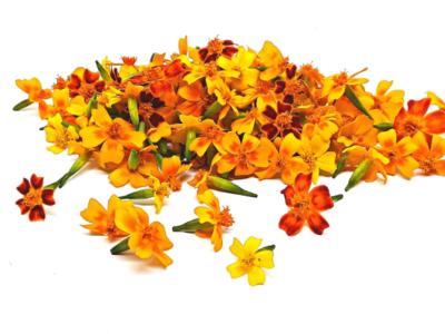 Fresh EDIBLE  Marigold Medley-Tagetes Variety