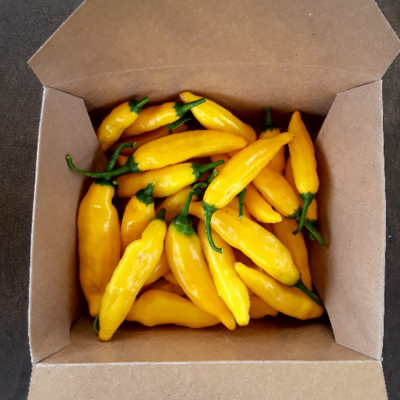 FRESH Aji Lemon/limon peppers - Capsicum baccatum
