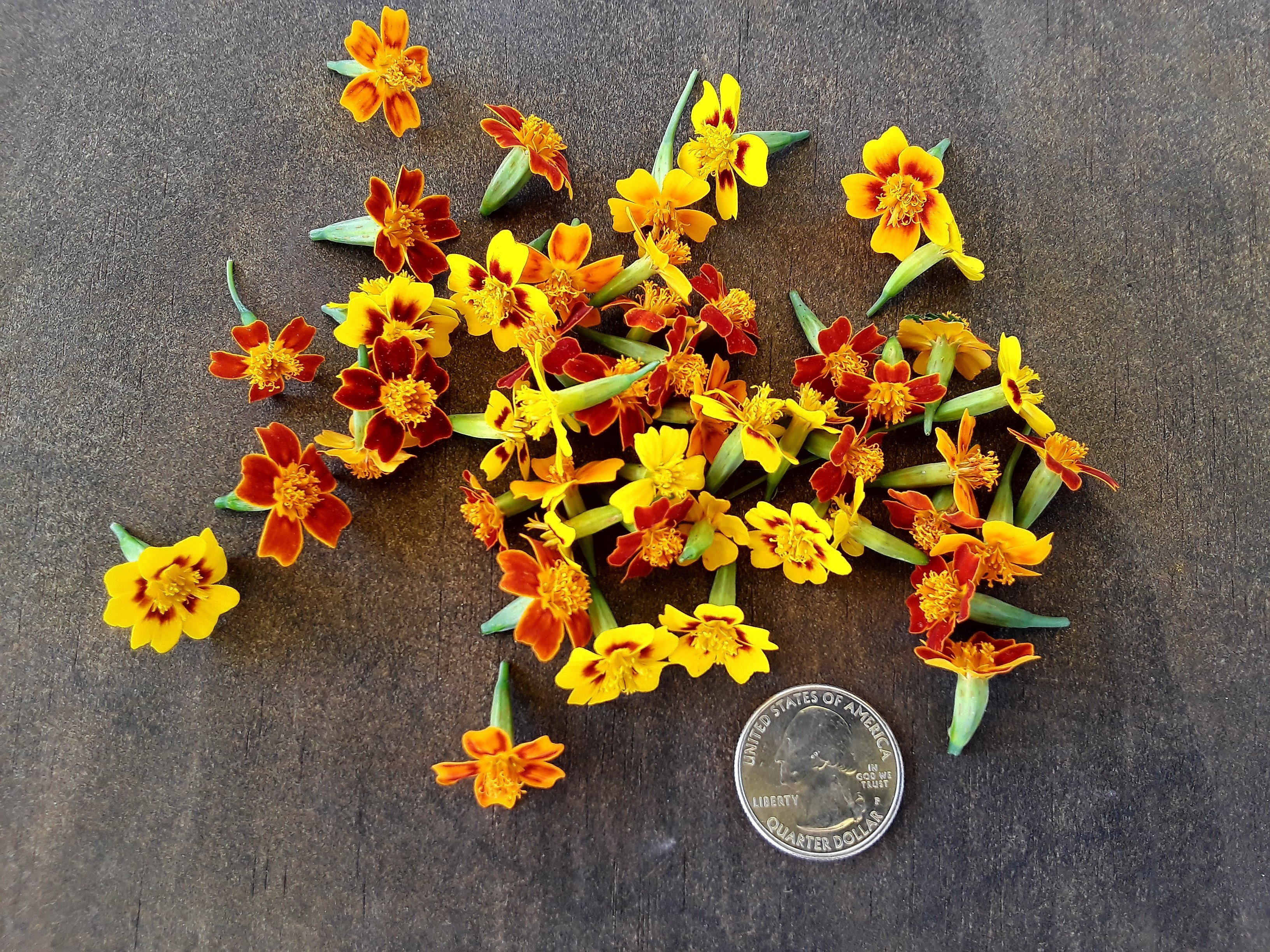 FRESH/EDIBLE Marigold flower medley. Tagettes variety. *50 Count 00005