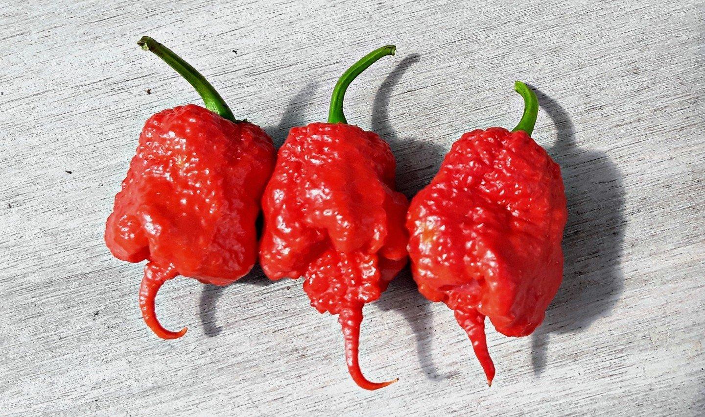 Fresh Carolina Reaper peppers: World's hottest pepper! *5 Count. 00006