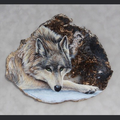 Piercing Stare-Gray Wolf